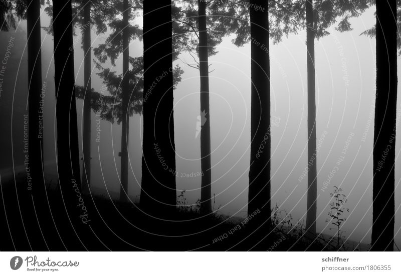 Nature Plant Tree Loneliness Winter Dark Forest Black Gray Fog Fear Bushes Mysterious Grief Tree trunk Fir tree