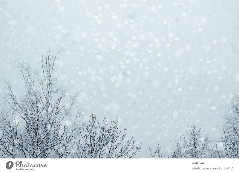 Tree Winter Snow Bright Snowfall Snowflake