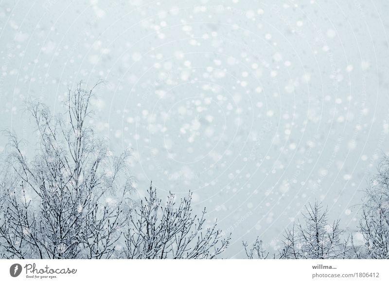 white skirt Winter Snow Snowfall Tree Bright flake vertebrae Snowflake Exterior shot