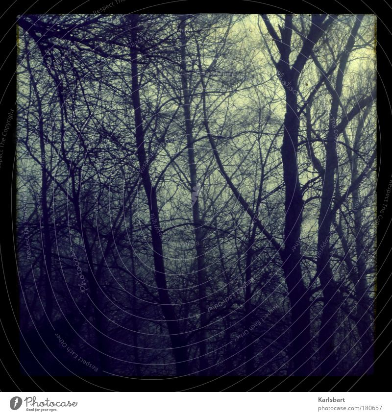 Nature Tree Winter Loneliness Forest Environment Death Cold Autumn Sadness Dream Fear Fog Lomography Design Lifestyle