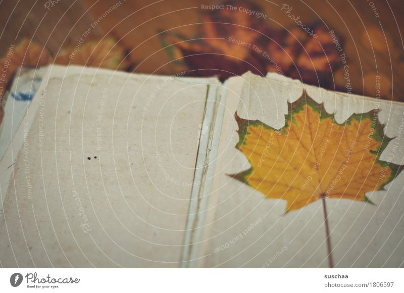 blank sheet II Book Page Empty Leaf Paper Autumn Old Broken Retro Reading Write Diary Notebook Legacy Sadness Analog Know Nostalgia Memory Yellowed Transience
