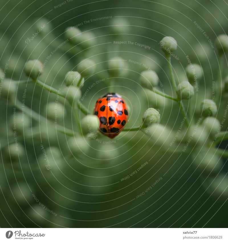 Center Point Life Harmonious Environment Nature Plant Animal Spring Blossom Leaf bud Elderflower Wild animal Beetle Wing Ladybird 1 Crawl Glittering Positive