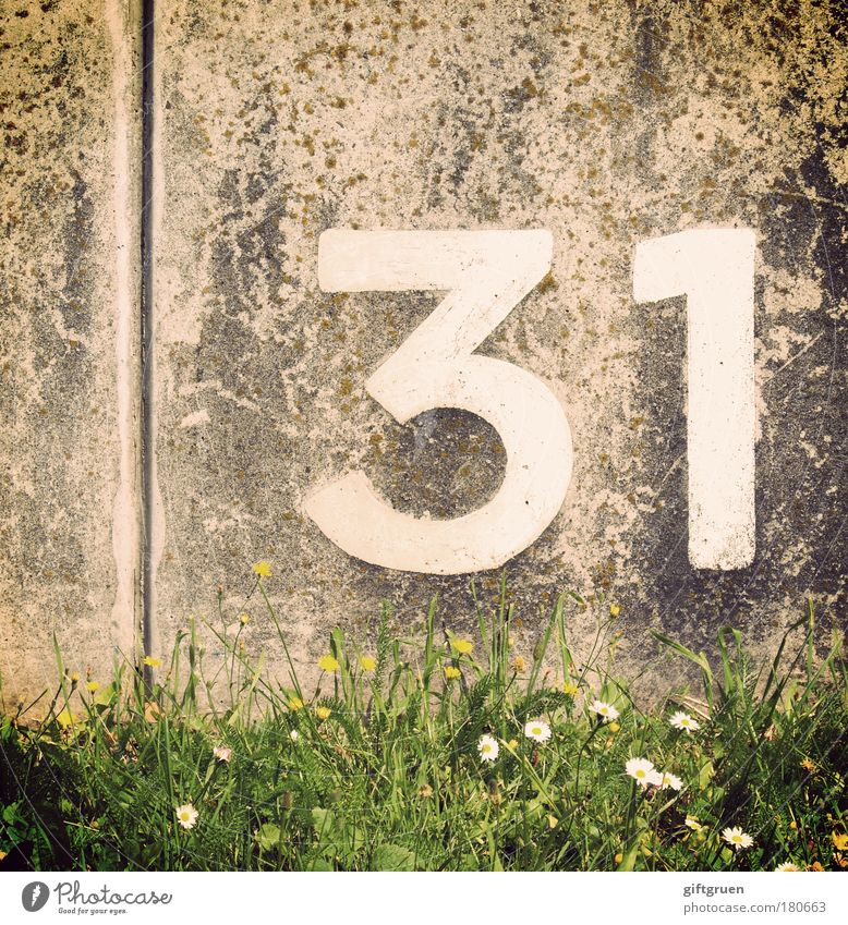 Meadow Grass Wall (barrier) Line Birthday Concrete Arrangement Characters Digits and numbers Write Sign Daisy Furrow Calculation Numbers