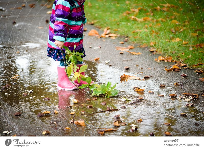 Human being Child Joy Girl Autumn Playing Rain Park Trip Wet To go for a walk Twig Toddler Autumnal Puddle Rubber boots