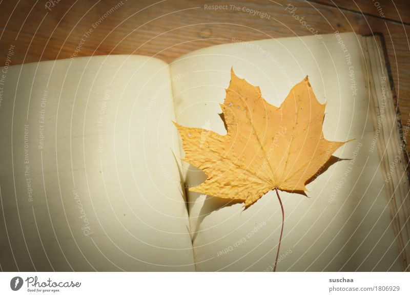 blank sheet Book Diary Notebook Page Write Blank Old Retro Yellowed Empty Leaf Autumn Memory