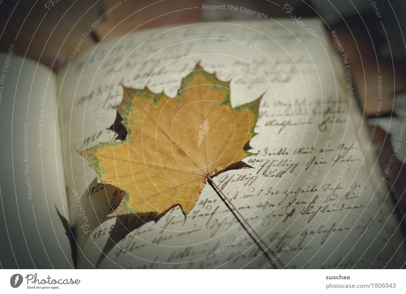page + sheet III Book Diary Handwriting cursive Old Retro Legacy Page Print media Autumn Leaf Document Yellowed Grunge Write Letter (Mail) correspondence