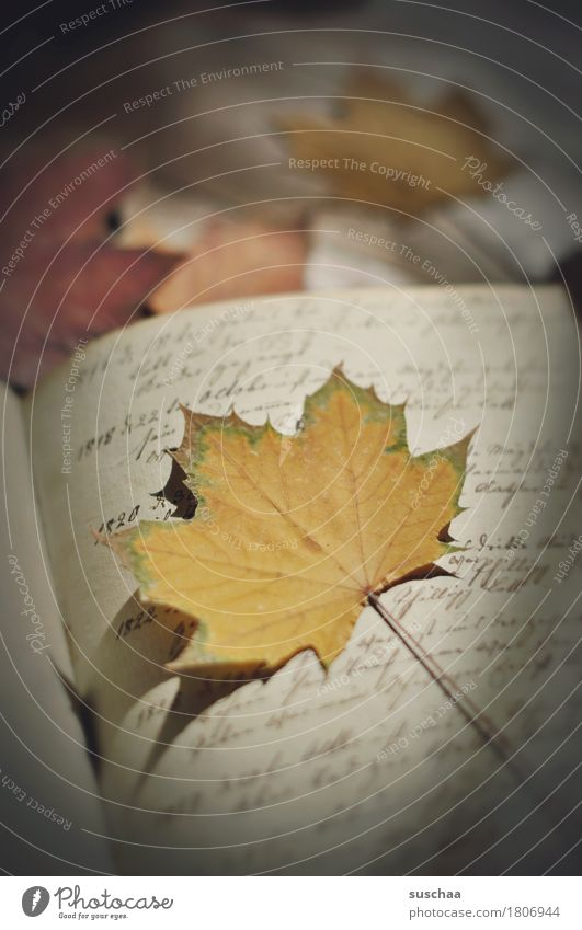 page + sheet II Book Diary Handwriting cursive Old Retro Legacy Page Print media Autumn Leaf Document Yellowed Grunge Write Letter (Mail) correspondence
