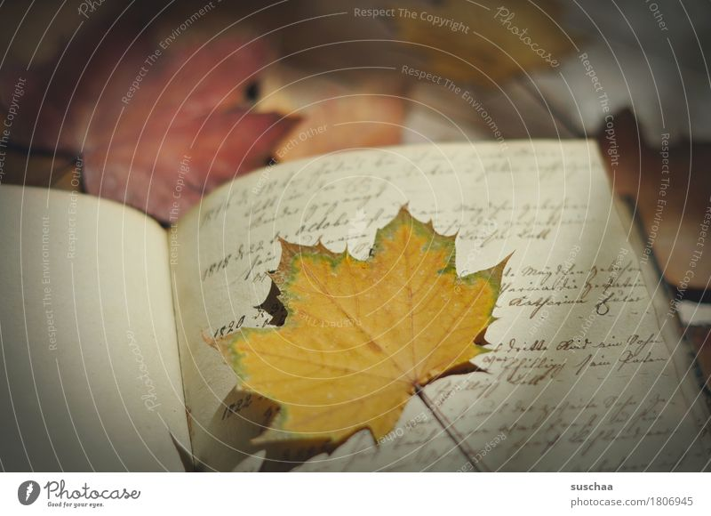 Old Leaf Autumn Retro Book Transience Information Write Document Letter (Mail) Page Piece of paper Print media Handwriting Legacy Yellowed