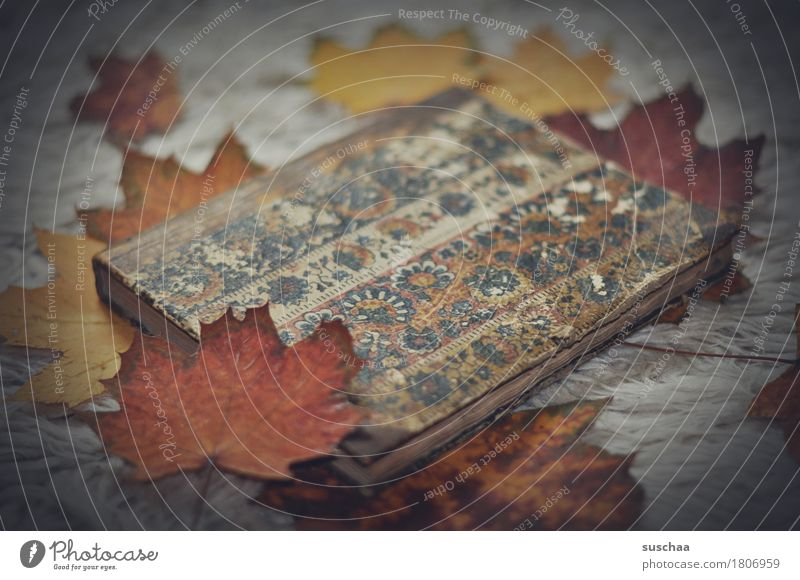 old book IX Book Notebook Binding Reading Write Print media Autumn Cozy Paper Old Retro Dark Sadness Old fashioned Literature Library Know Analog Nostalgia