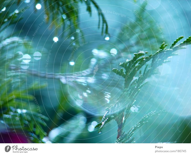 Nature Tree Green Plant Summer Rain Glittering Weather Drops of water Wet Growth Bushes Transience Exceptional Bizarre