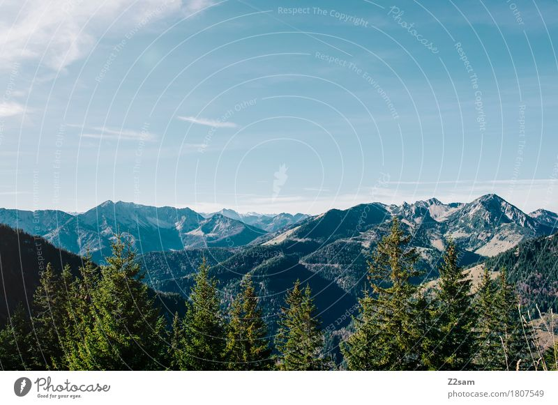 postcard Hiking Nature Landscape Sky Summer Beautiful weather Tree Forest Alps Mountain Infinity Sustainability Natural Blue Green Colour Freedom