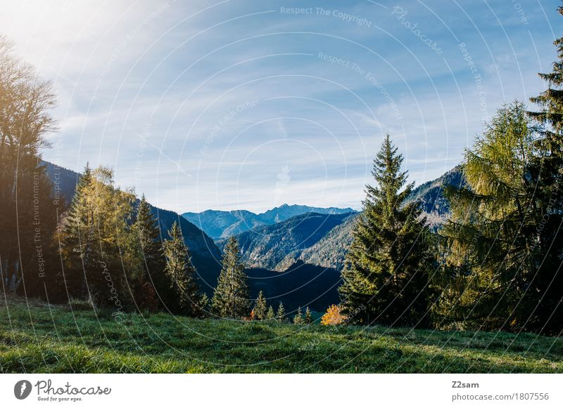 Bavarian cell Hiking Nature Landscape Sky Summer Beautiful weather Tree Meadow Alps Mountain Sustainability Natural Blue Green Relaxation Colour Idyll