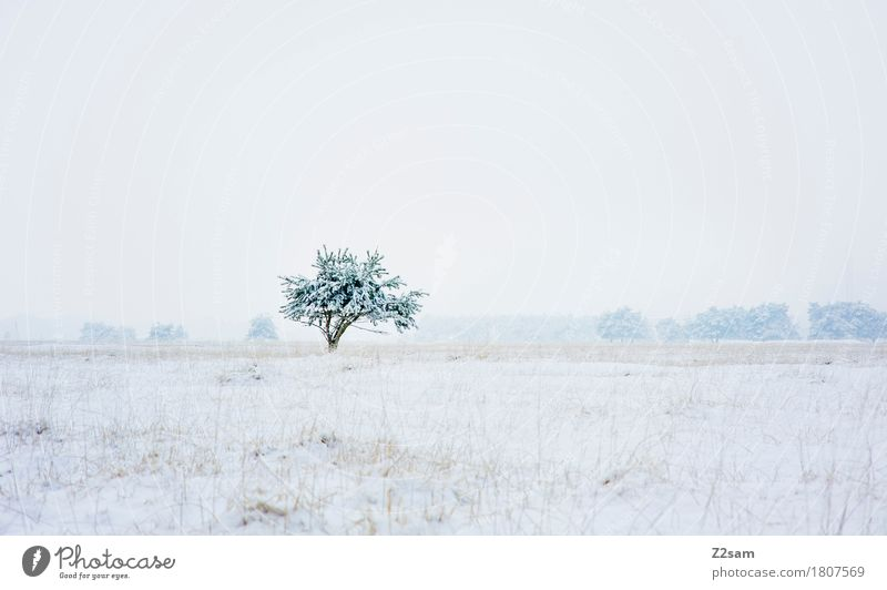 all alone Winter Nature Landscape Bad weather Snow Tree Heathland Dark Simple Fresh Cold Sustainability Natural Gloomy Blue Gray White Sadness Loneliness Idyll