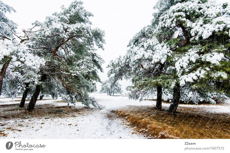 winter dream Winter Nature Landscape Ice Frost Snow Tree Forest Heathland Simple Cold Sustainability Natural Gloomy Brown Green White Loneliness Calm
