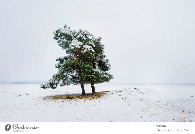 A little tree stands... Winter Environment Nature Landscape Bad weather Ice Frost Snow Tree Heathland Simple Cold Sustainability Natural Gloomy Green White