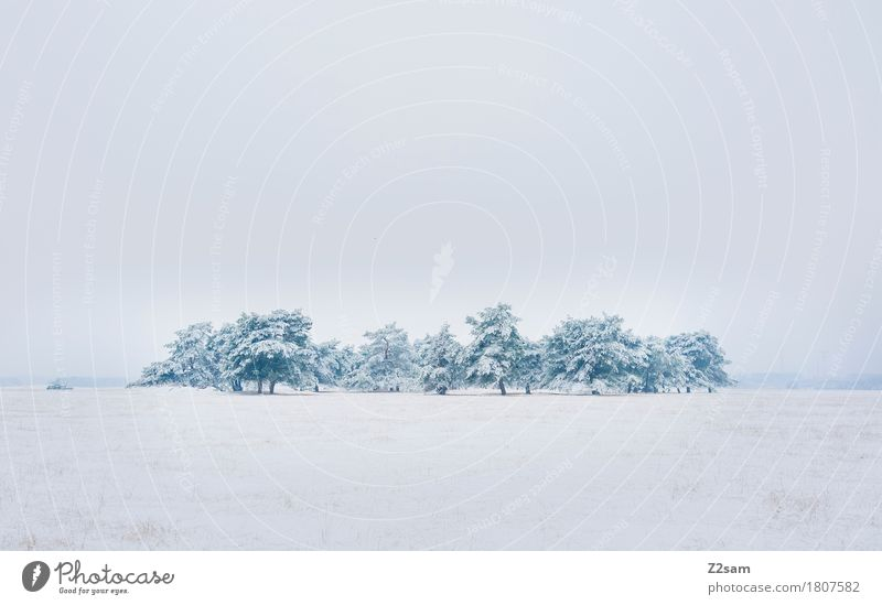 Nature White Tree Landscape Loneliness Calm Far-off places Winter Environment Cold Natural Snow Gray Field Ice Gloomy