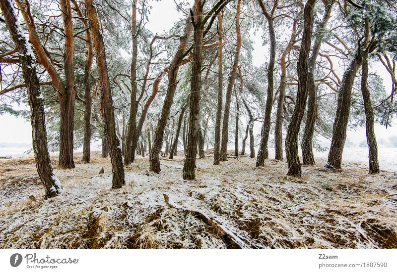 latecomers Winter Environment Nature Landscape Bad weather Ice Frost Tree Forest Threat Simple Cold Gloomy White Idyll Sustainability Environmental protection