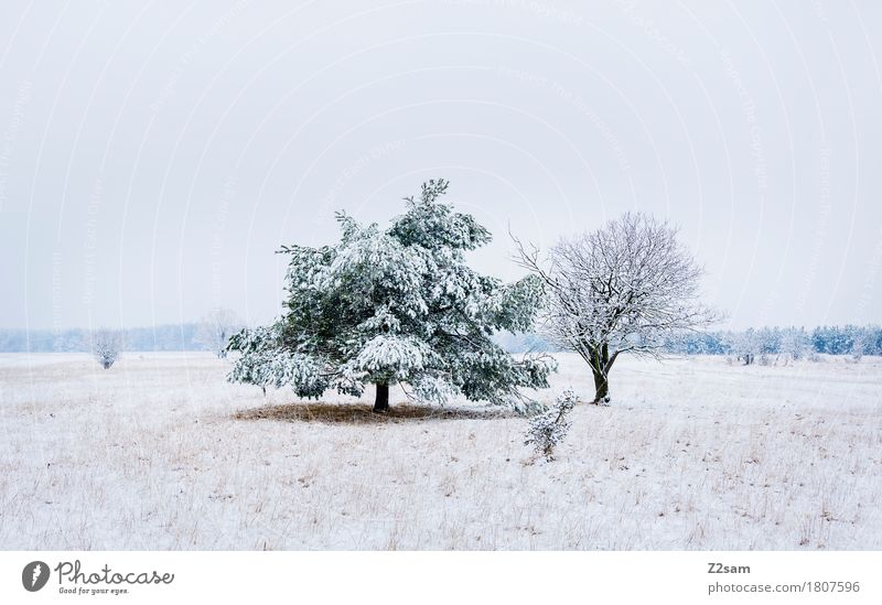Nature White Tree Landscape Winter Environment Cold Natural Snow Gray Together Ice Gloomy Idyll Simple Mysterious
