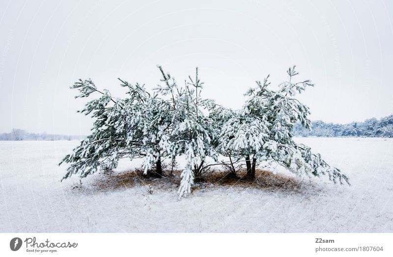 Nature White Tree Landscape Loneliness Calm Winter Environment Cold Natural Snow Field Ice Gloomy Idyll Simple