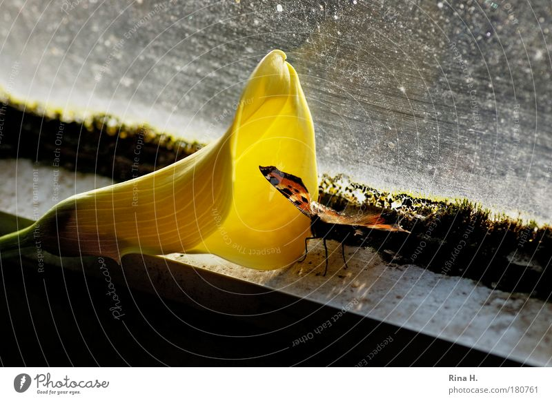 Flower Yellow Emotions Dirty Sit Esthetic Window Uniqueness Hope Exceptional Illuminate Mysterious Contact Butterfly Decline Whimsical
