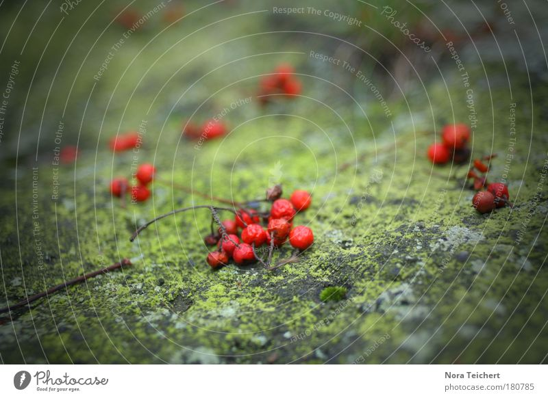 Nature Green Beautiful Red Plant Environment Landscape Stone Blossom Dream Art Park Moody Rock Lie Exceptional
