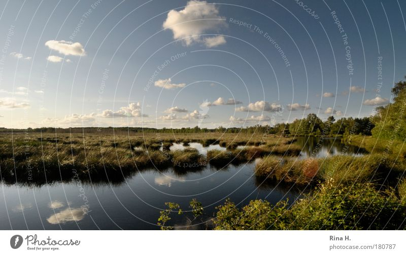sky moor Colour photo Exterior shot Copy Space top Day Reflection Sunlight Central perspective Wide angle Environment Nature Landscape Water Sky Clouds Horizon