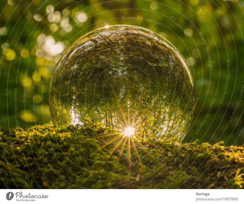 Magic Forest in the Sphere Nature Landscape Plant Animal Sun Spring Summer Autumn Tree Grass Moss Garden Park Meadow Glass Glittering Glass ball Green
