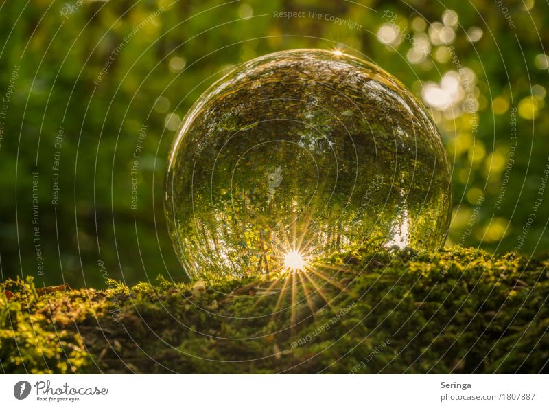 Outlook for 2017 Glass Illuminate Glass ball Carpet of moss Flair Sun Green Colour photo Multicoloured Exterior shot Close-up Detail Macro (Extreme close-up)