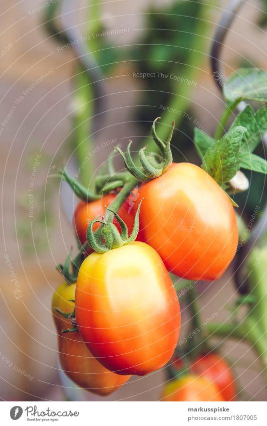 Healthy Eating Red Joy Garden Food Orange Leisure and hobbies Growth Nutrition Fresh Joie de vivre (Vitality) Vegetable Harvest Organic produce