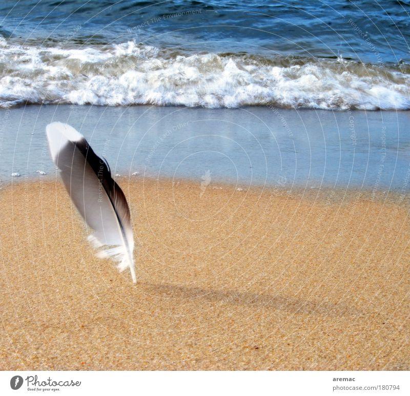 Nature Ocean Summer Beach Calm Animal Sand Moody Waves Coast Feather Baltic Sea Seagull Bird Summer vacation