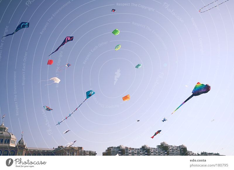 |Kite|#2| Colour photo Exterior shot Deserted Morning Contrast Silhouette Deep depth of field Worm's-eye view Air Sky Sun kite Looking Free Curiosity Blue Joy