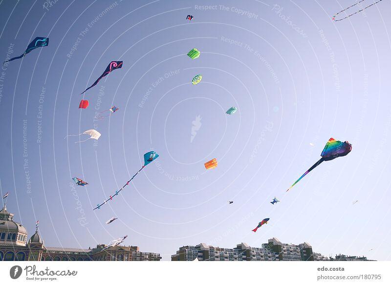 |Kite|#2| Sky Sun Blue Joy Beach Happy Air Environment Free Happiness Curiosity Toys Nature Festival Experience