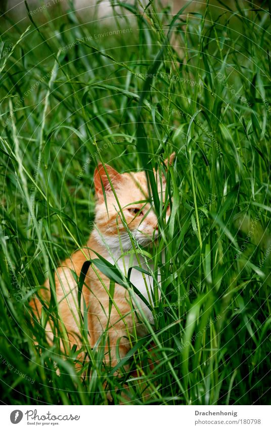 cat grass Colour photo Exterior shot Detail Deserted Copy Space top Copy Space middle Neutral Background Morning Day Sunlight Sunbeam Shallow depth of field