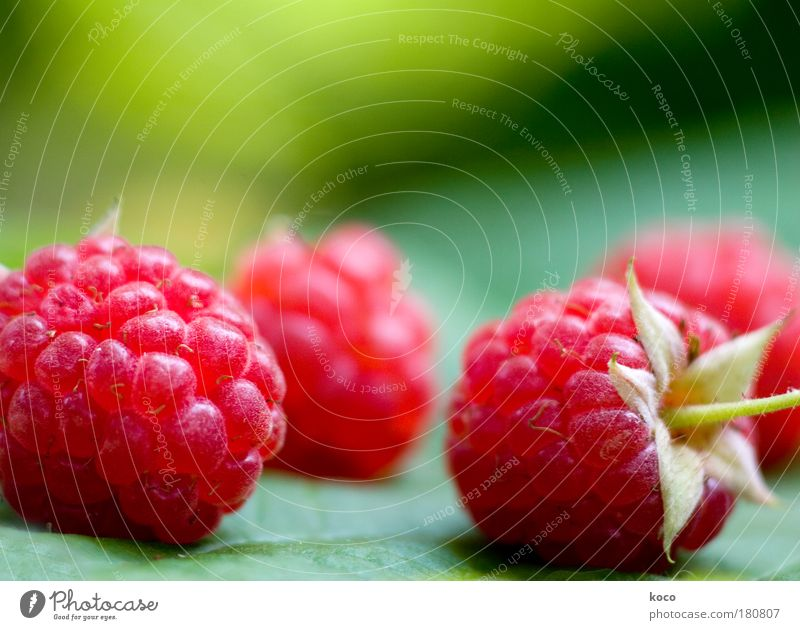 small raspberry Colour photo Multicoloured Exterior shot Close-up Detail Deserted Day Blur Food Fruit Nutrition Organic produce Vegetarian diet Summer Garden