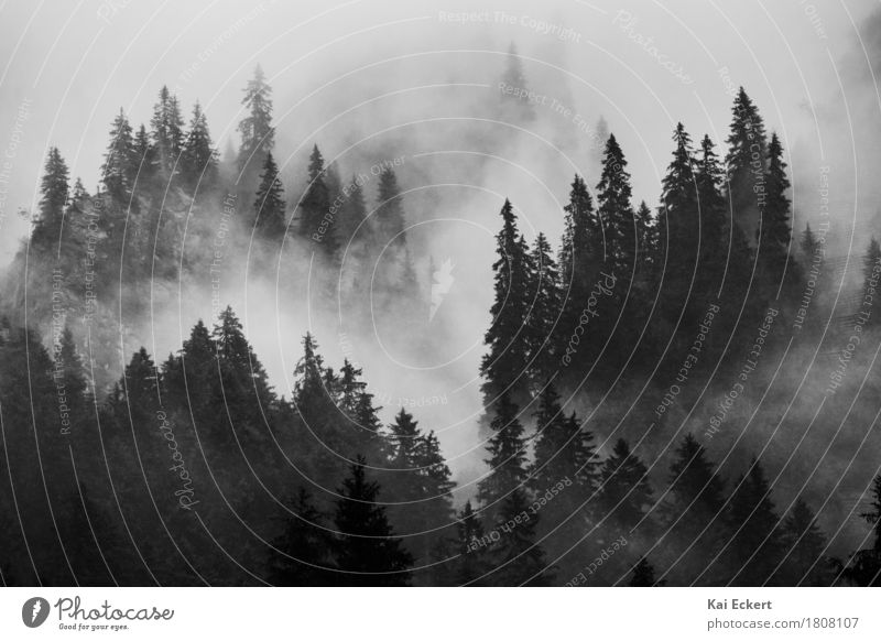 Mountains, forest and fog II Nature Landscape Bad weather Fog Tree Forest Alps Esthetic Natural Moody Power Calm Grief Pain Adventure Concentrate photocase