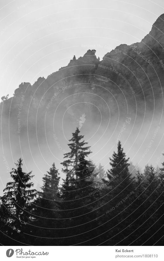 Mountains, forest and fog I Nature Landscape Fog Tree Forest Alps Dark Cold Calm Loneliness Mysterious Surrealism Transience photocase Black & white photo