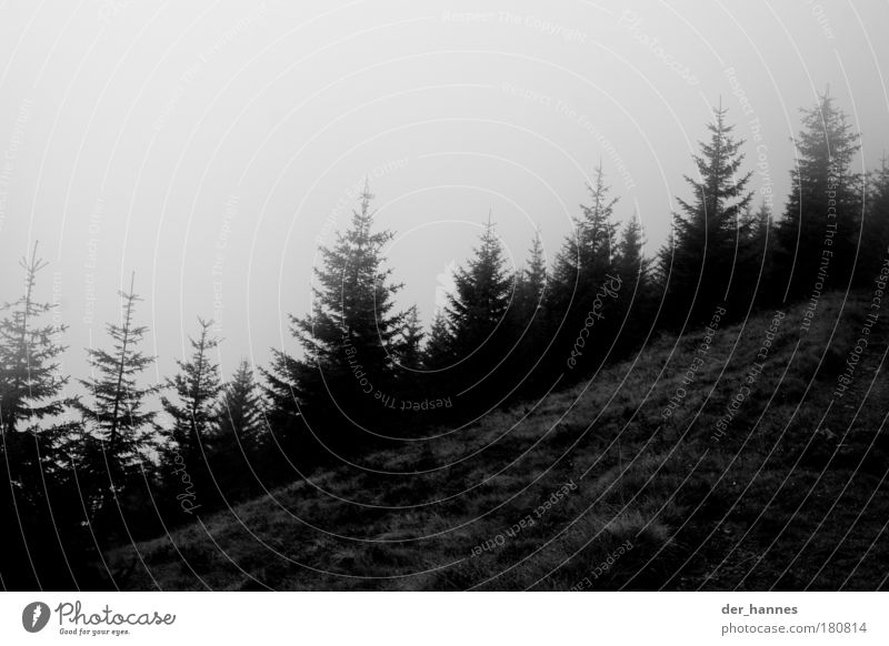 Nature Sky Tree Plant Forest Landscape Moody Field Fog Environment Gloomy Hill Fir tree Bad weather Black & white photo