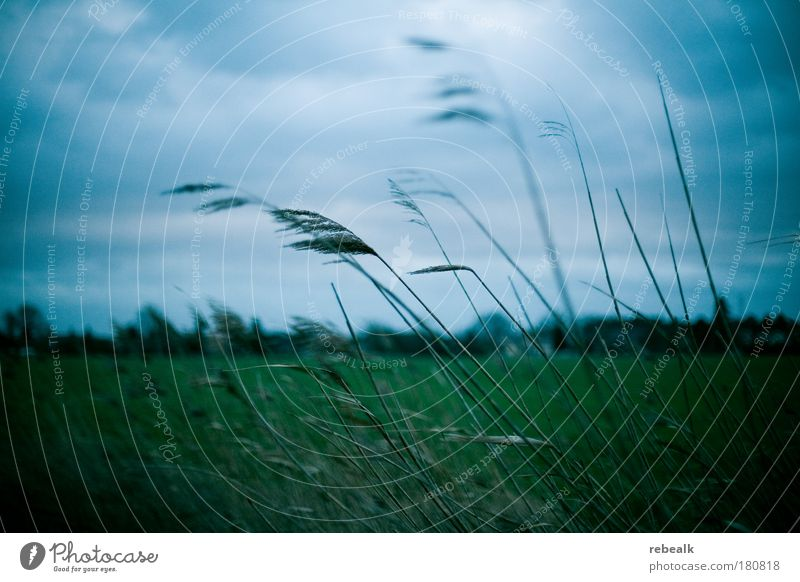 Nature Sky Green Blue Plant Clouds Dark Cold Autumn Meadow Emotions Grass Sadness Moody Field Wind