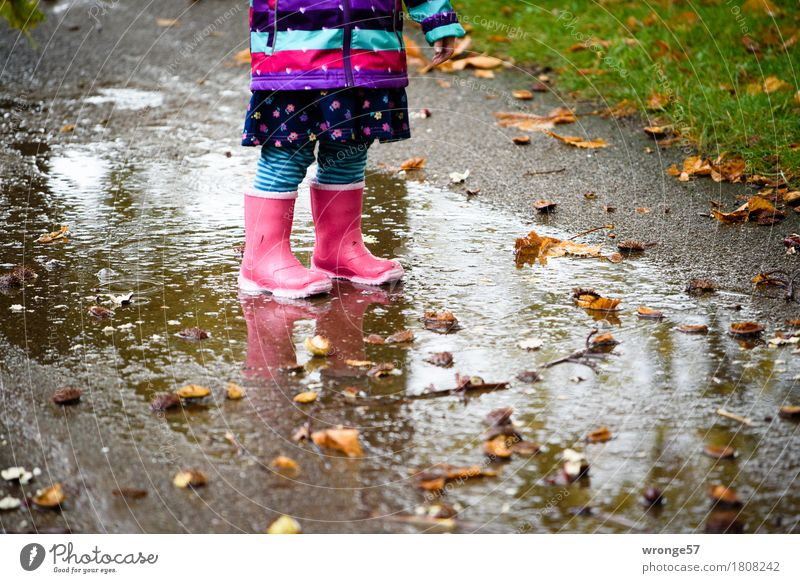 Regentrude I Child Toddler Girl 1 Human being 1 - 3 years Autumn Rain Grass Chestnut Park Stand Wait Small Wet Multicoloured Autumnal Puddle Rubber boots Pink