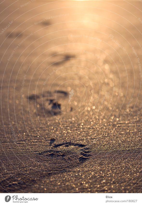Footprints in the golden glittering sand Beach Sand Going Walking Free Optimism Willpower Brave Determination Warm-heartedness Attentive Barefoot Sandy beach