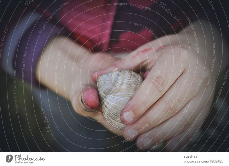 Child Hand Dirty Fingers Touch Discover Snail Attempt Experience Snail shell Inhabited