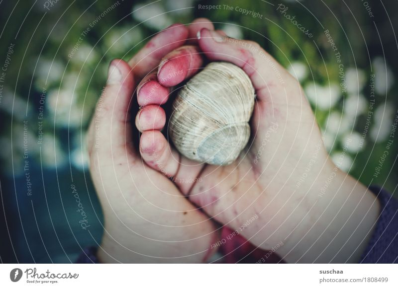 children's hands III Child Hand Fingers Dirty adventurous Discover Touch look Experience To hold on Protect Snail Snail shell at home Inhabited Infancy
