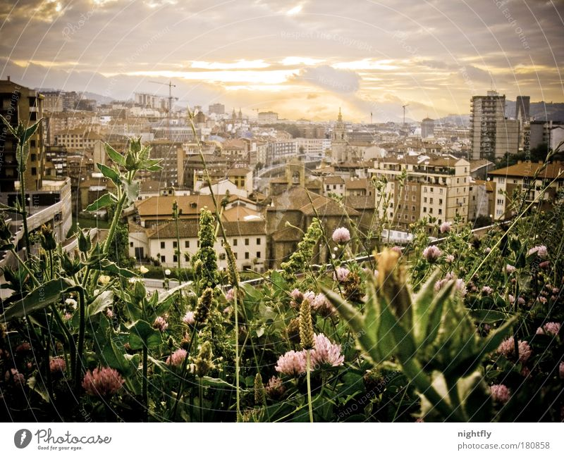 Nature Sky Flower City Plant Summer Leaf House (Residential Structure) Clouds Spain Relaxation Meadow Blossom Grass Park Warmth