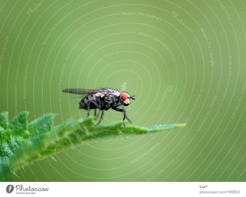 Green Plant Animal Small Fly Insect Crouch Mosquitos