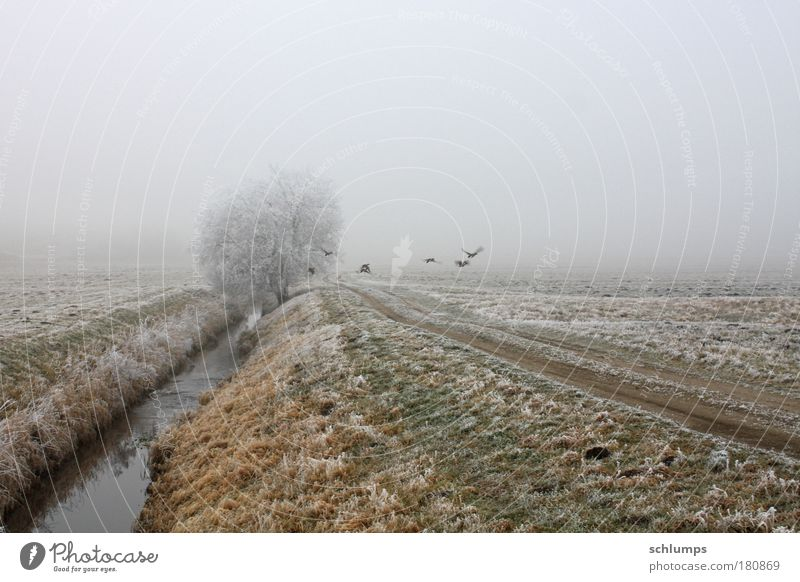 cursed Colour photo Exterior shot Morning Nature Landscape Animal Water Winter Fog Tree Field Wild animal Group of animals Mecklenburg-Western Pomerania Sadness