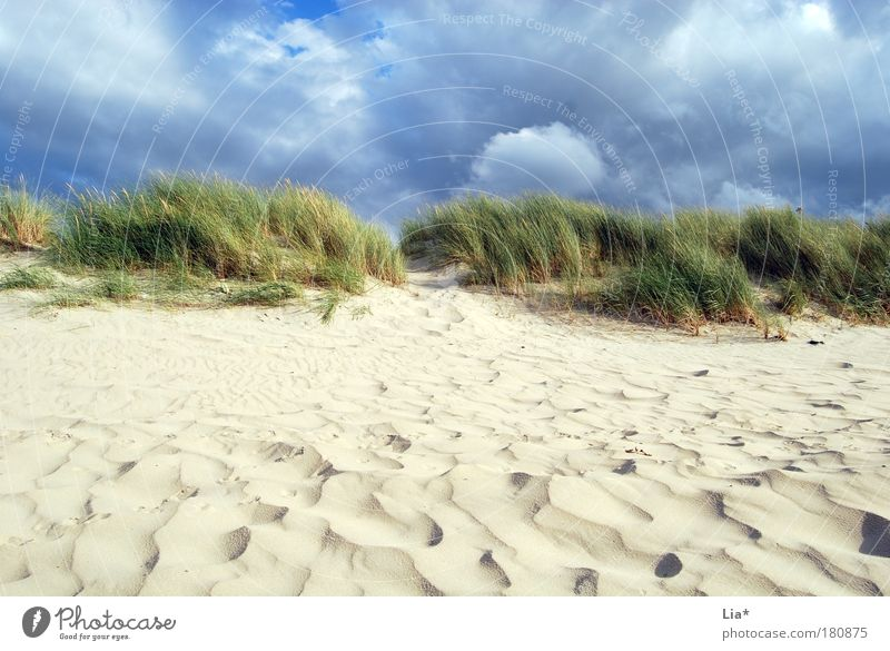 I want to go back to the North Sea. Vacation & Travel Beach Ocean Environment Nature Sand Clouds Wind Grass Marram grass Beach dune Relaxation Land Feature