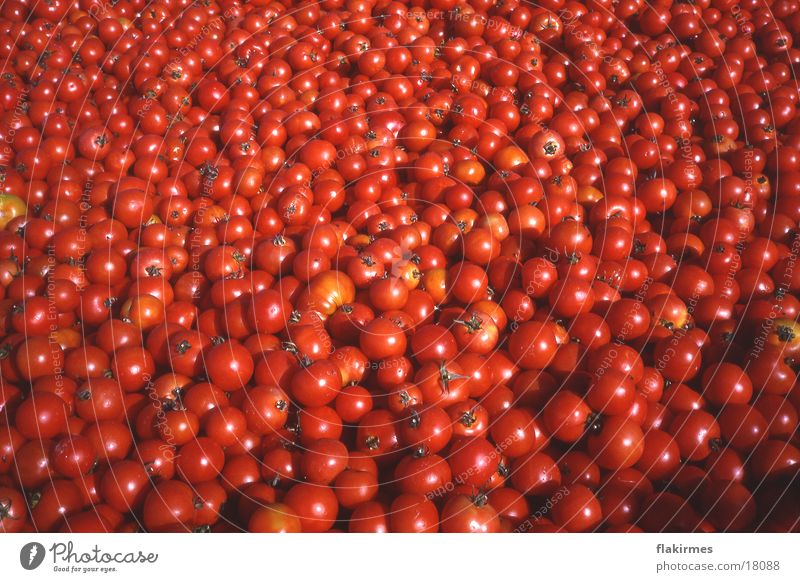 Tomatoes full Food Red Healthy