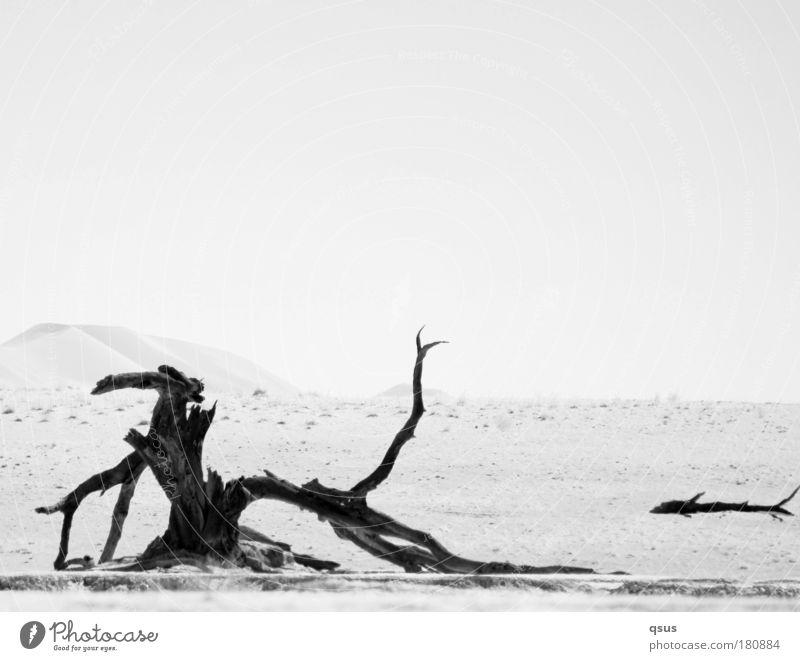 Sky Nature Tree Plant Calm Loneliness Landscape Environment Sand Earth Desert Hill Transience Dune Wanderlust Black & white photo