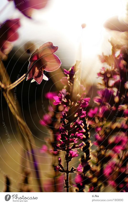 a last summer farewell greeting Colour photo Multicoloured Close-up Deserted Day Evening Light Shadow Contrast Silhouette Reflection Light (Natural Phenomenon)