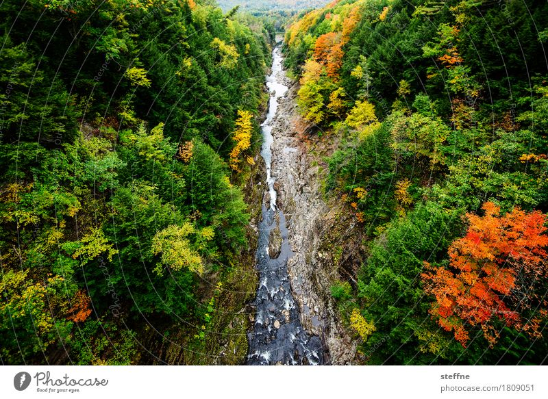 Tree Landscape Forest Autumn Exceptional Esthetic Canyon Colouring Indian Summer New England
